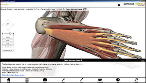 3D Muscle software